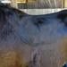 saddleimpressionsidesteele