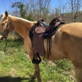 My TWH loves my new Steele Mountaineer, as do I.