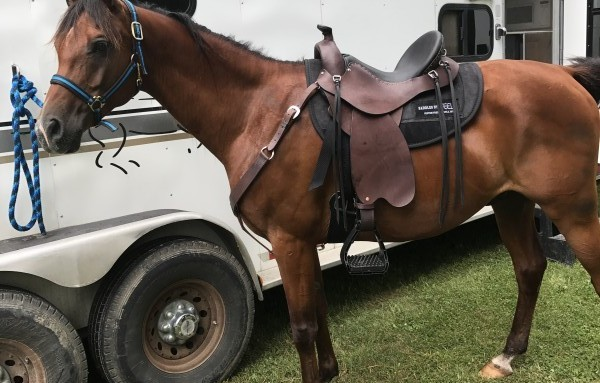 My Steele saddle is an awesome fit.