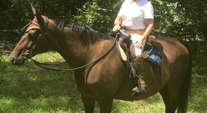 I'm thrilled with my new Steele Frontier saddle.